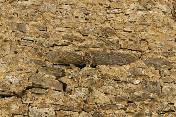 eulen camoflage umgebung steine