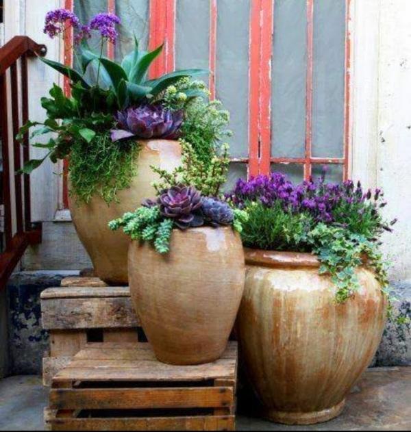 gartenideen herbst garten topfpflanzen balkonpflanzen herbstblumen