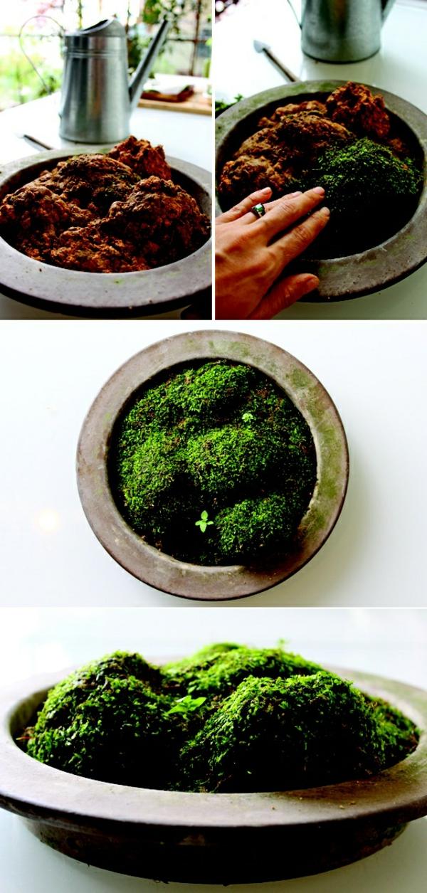gartenideen herbst garten topfpflanzen moos einpflanzen