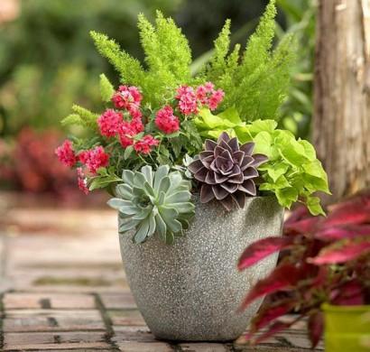 Gartenideen Im Herbst U2013 Bringen Sie Ihre Topfpflanzen Nach Drinnen!