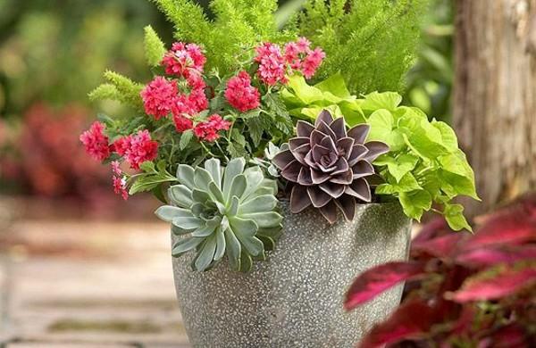Gartengestaltung garten und landschaftsbau freshideen 25 - Topfpflanzen garten ...