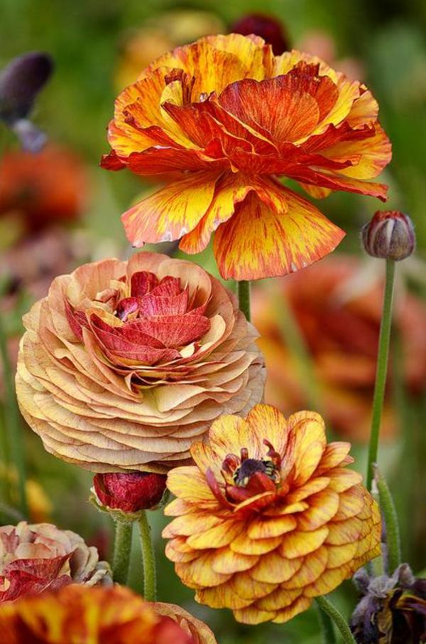 herbstblumen herbst gartengestaltung ideen bilder tipps und tricks
