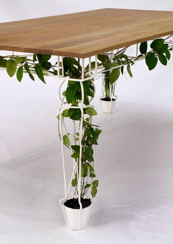 holztisch esszimmertisch zimmerpflanzen topfpflanze kletterpflanzen