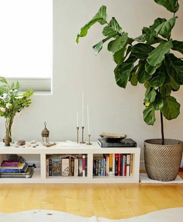 kübelpflanzen feigenbaum zimmerpflanzen wenig licht zimmerbäumchen