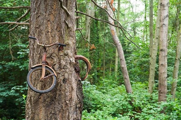 mensch und natur erde und mensch naturbilder baum fahrrad