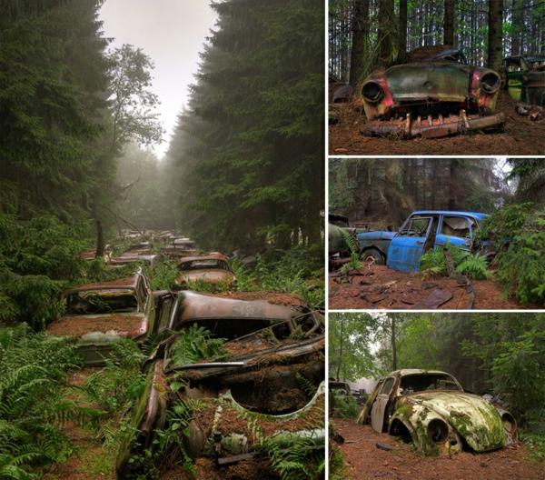mensch und natur erde und mensch naturbilder wald autoschrott