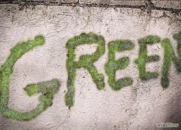 moos graffiti lernen graffiti erstellen graffiti bilder grün