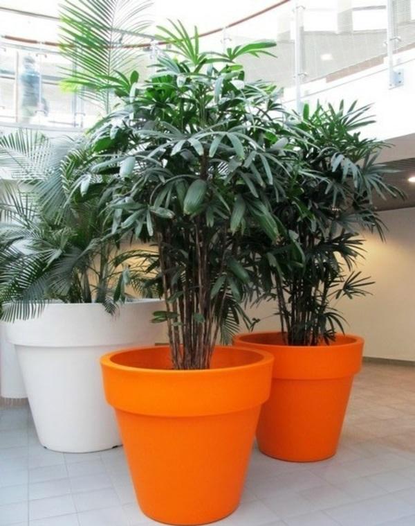 palmenarten zimmerpflanzen rhapis excelsa lady palm farbige blumentöpfe