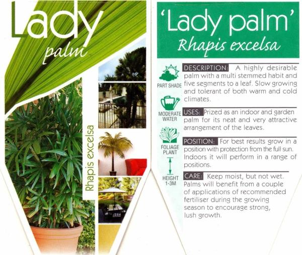 palmenarten zimmerpflanzen rhapis excelsa lady palm steckenpalme