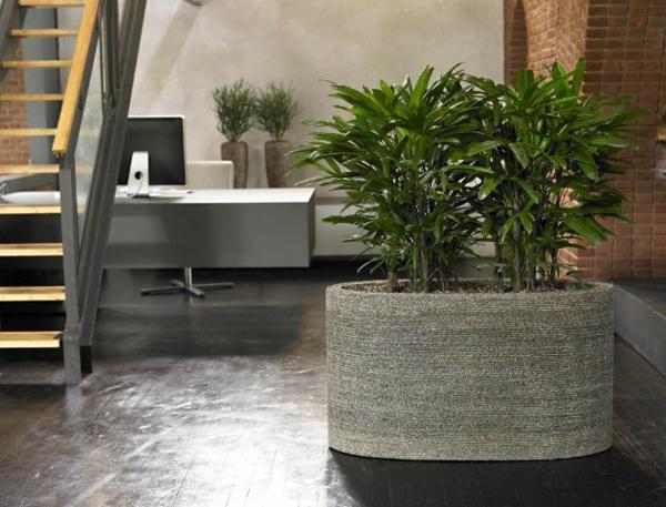 palmenarten zimmerpflanzen rhapis excelsa geh rt zu den zimmerpalmen. Black Bedroom Furniture Sets. Home Design Ideas