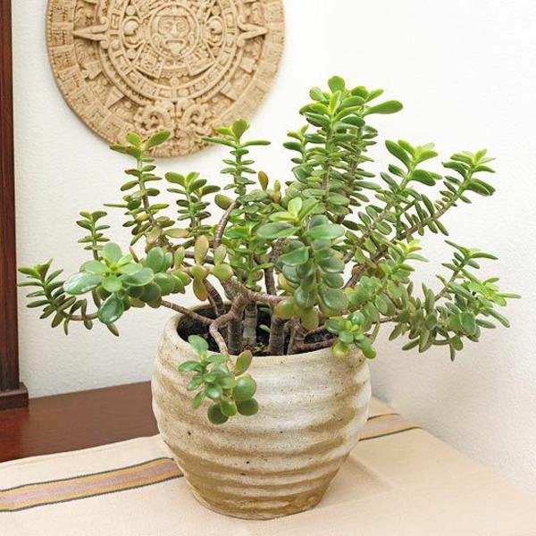 pflegeleichte zimmerpflanzen geldbaum topfpflanzen ton blumentöpfe