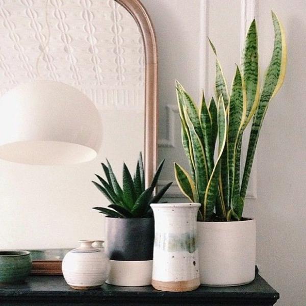 Zimmerpflanzen bilder gem tliche deko ideen mit topfpflanzen for Deko topfpflanzen