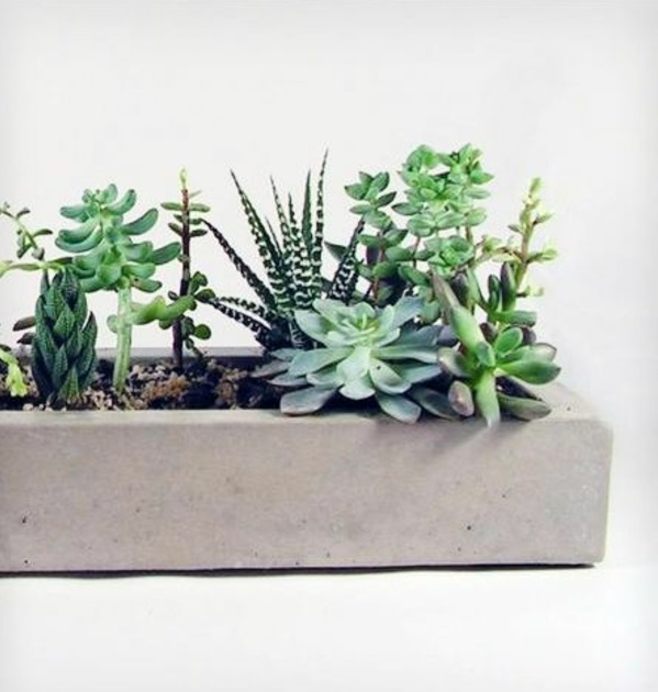 pflegeleichte zimmerpflanzen topfpflanzen sukkulenten steintöpfe
