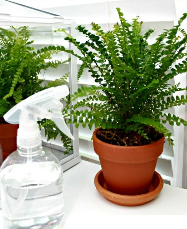 pflegeleichte zimmerpflanzen gro bilder topfpflanzen t pfe pictures to pin on pinterest. Black Bedroom Furniture Sets. Home Design Ideas