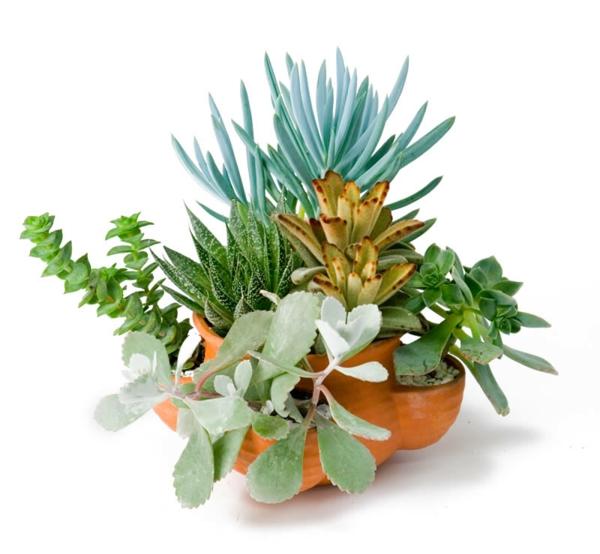 pflegeleichte zimmerpflanzen sukkulenten unempfindliche zimmergrünpflanzen
