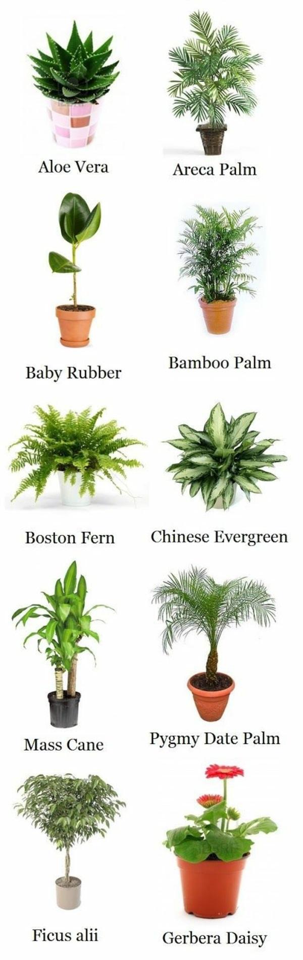 Palmenarten zimmerpflanzen rhapis excelsa geh rt zu den zimmerpalmen - Gartentrampolin stiftung warentest ...