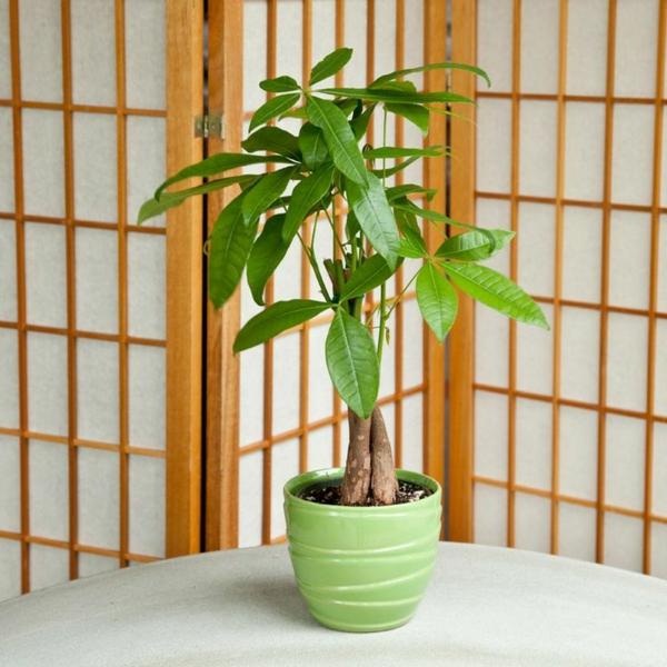 topfpflanzen zummergrünpflanzen blumentopf grün