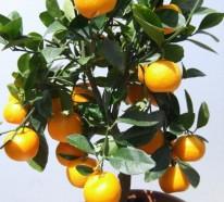 Zimmerpflanzen Bilder – gemütliche Deko Ideen mit Topfpflanzen