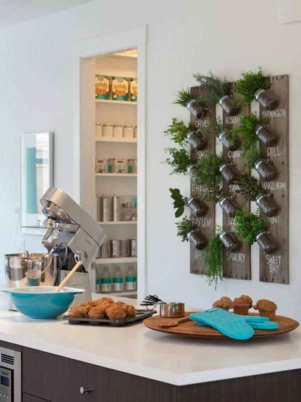 zimmerpflanzen bilder kräutergarten küche einrichten wand