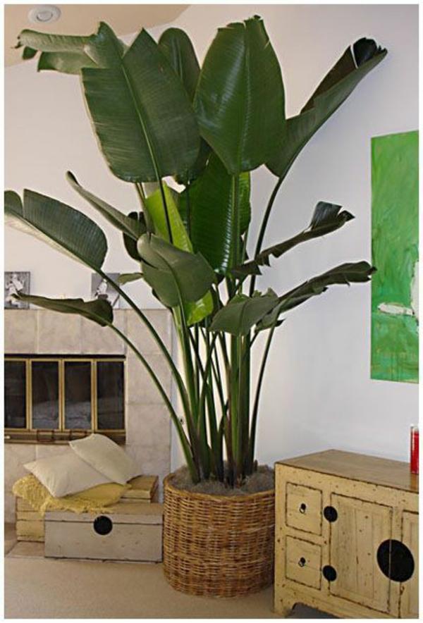 zimmerpflanzen bilder - gemütliche deko ideen mit topfpflanzen - Grose Wohnzimmer Pflanzen