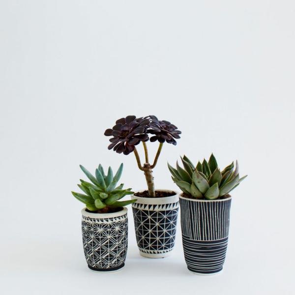 zimmerpflanzen bilder topfpflanzen sukkulenten dekorative blumentöpfe