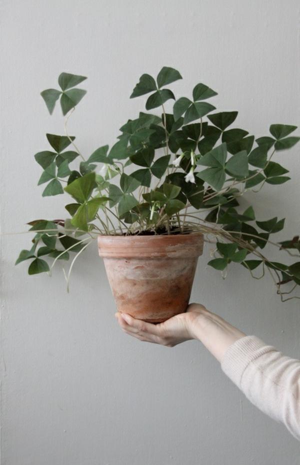 zimmerpflanzen bilder topfpflanzen zimmergrünpflanzen wanddekoration