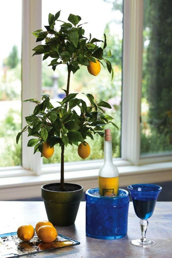 zimmerpflanzen bilder zitronenbaum topfpflanze