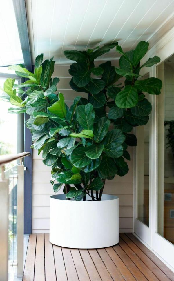 zimmerbäumchen zimmerpflanzen topfpflanze balkonpflanzen
