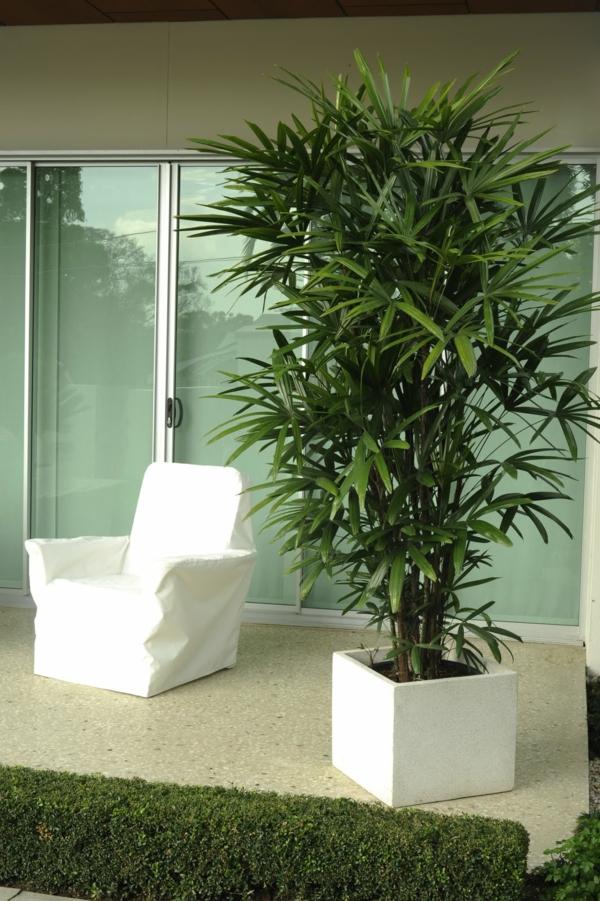 zimmerpalmen palmenarten zimmergrünpflanzen lady palm