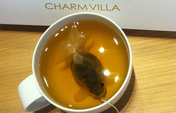 Teeeier goldfisch teebeutel färben originell
