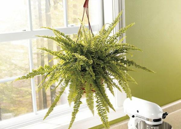 zimmerpflanzen die wenig licht brauchen. Black Bedroom Furniture Sets. Home Design Ideas