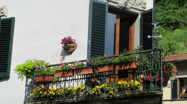 balkon bepflanzen balkonpflanzen eisengeländer