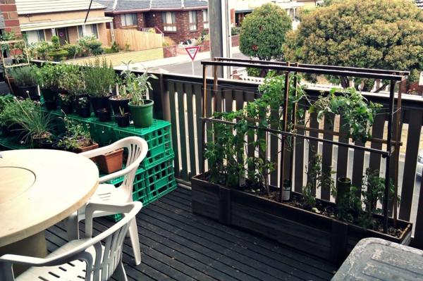 balkon pflanzen balkonpflanzen gemüse küchenkräuter