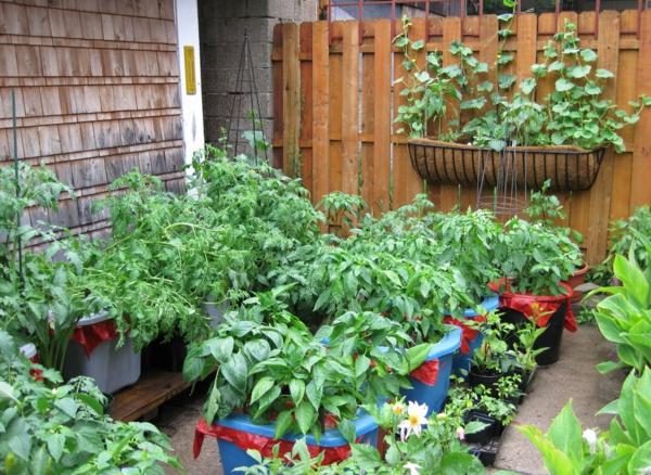 balkon bepflanzen balkonpflanzen kräuter gemüse