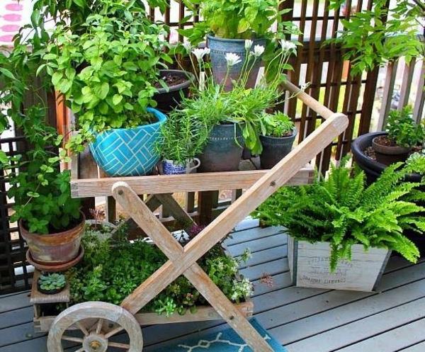 balkon pflanzen balkonpflanzen kräuter mobil