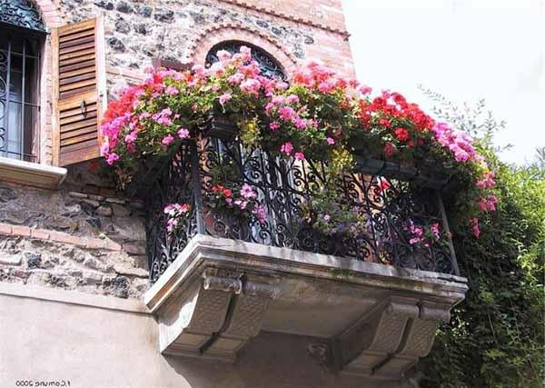 balkon bepflanzen balkonpflanzen pink rosa