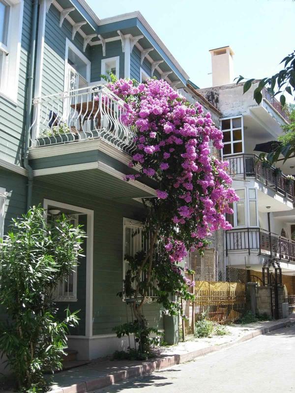 balkon bepflanzen exotisch pink