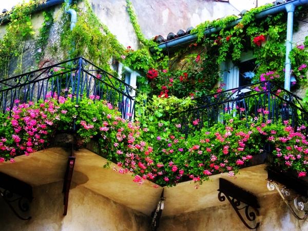balkon bepflanzen geranien rosa