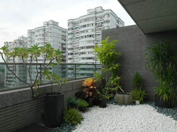 balkon bepflanzen tropenpflanzen kieselsteine