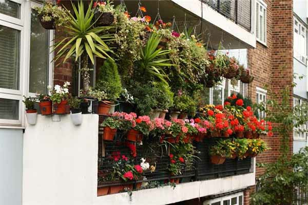 balkon bepflanzen yucca geranien hängepflanzen