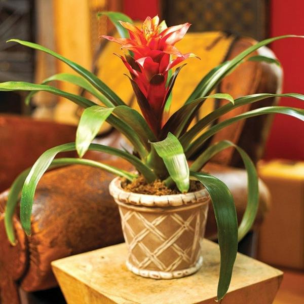 Zimmerpflanzen bl hend beleben sie ihr zuhause - Tolle zimmerpflanzen ...