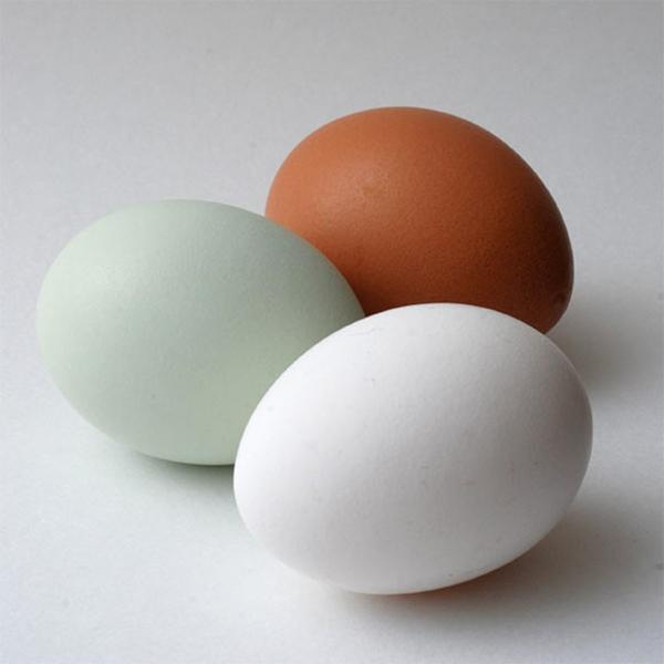 eierschalenfarben eier farbideen wandfarben palette farbgestaltung ideen