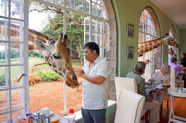 giraffe hotel schön weltweit märchenhaft natur