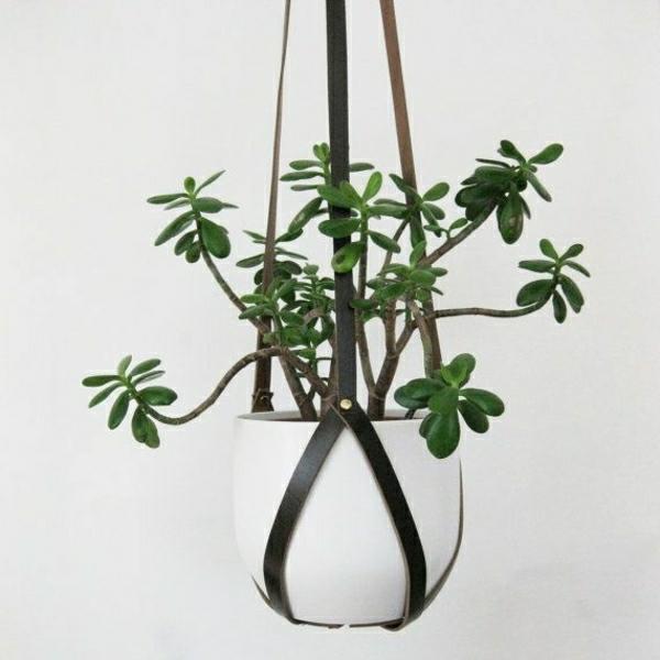 zimmerpflanzen arten bilder von den beliebtesten topfpflanzen. Black Bedroom Furniture Sets. Home Design Ideas