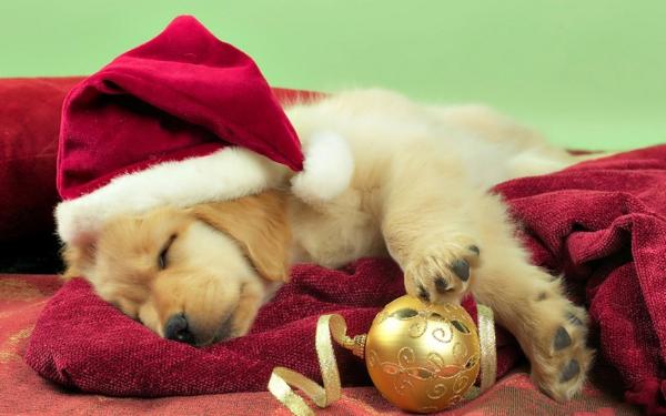 ideen für weihnachtsgeschenke welpe