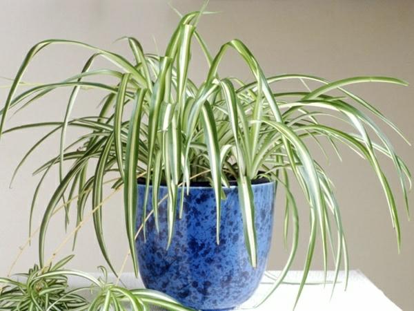 indoor garten gestalten zimmerpflanzen arten grünlilie