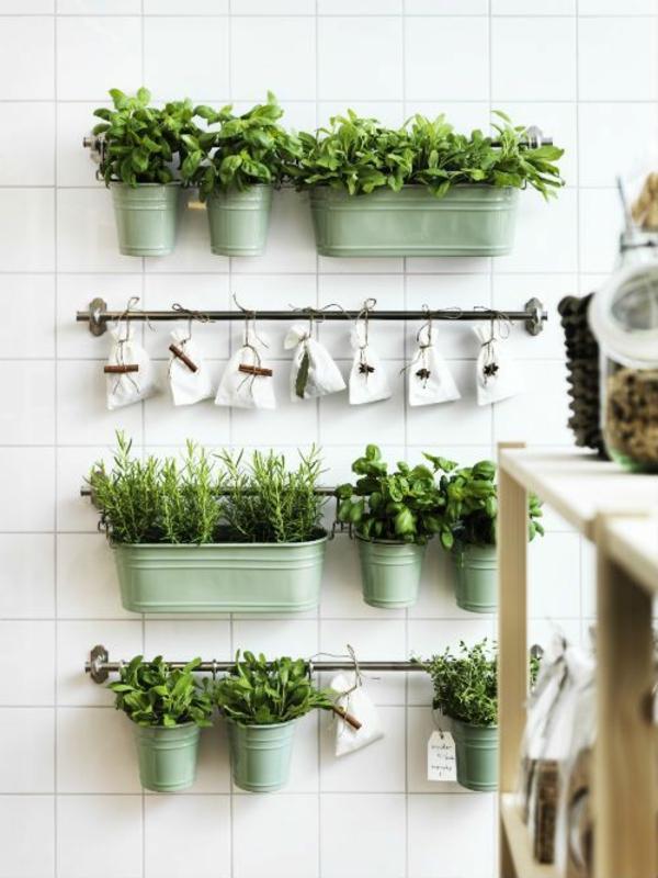 kräutergarten gestalten küchenwand zimmerpflanzen arten petersilie topfpflanzen