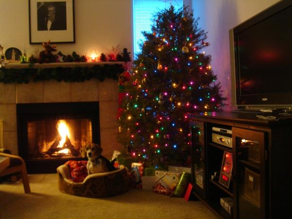 offene kamine weihnachtsbaum hund