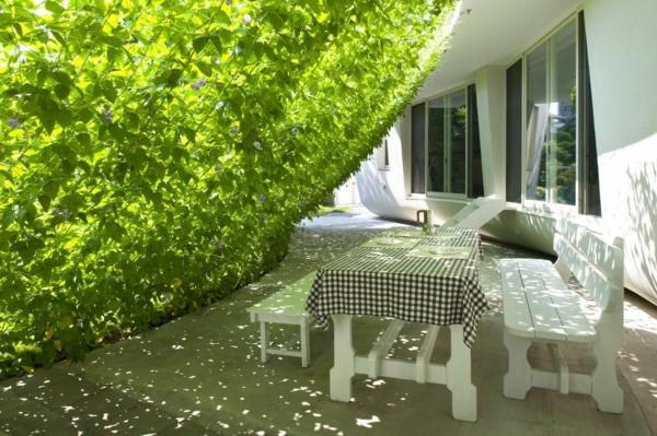 pergoladach terrassenüberdachung grüne pflanzen