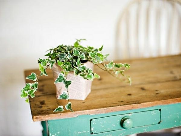 pflegeleichte zimmerpflanzen efeu tute zimmergrünpflanzen